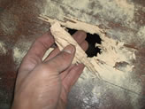 Woodworm infested Floor boards