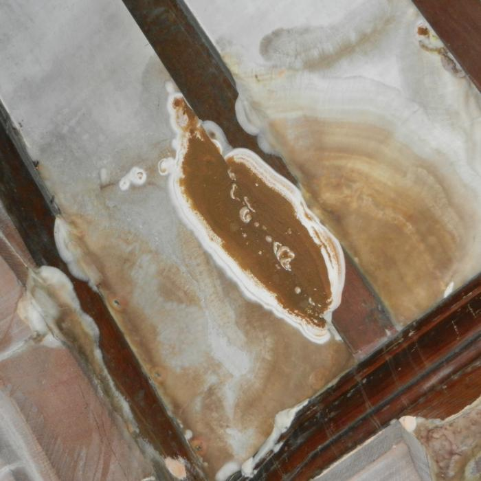 Dry rot Growth and fruiting body attacking roof spars as a result of water ingress.