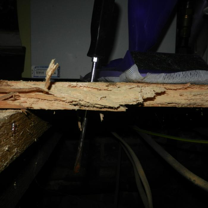 Heavily infested floorboard has completed lost its integrity and could easily be punctured with the use of a blunt screw driver. Timber in this condition is beyond treatment and requires replacement.