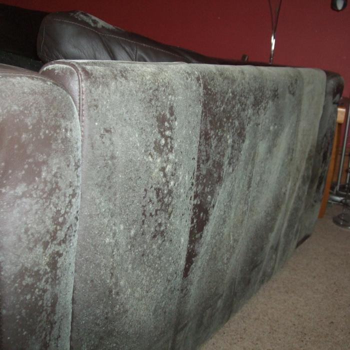 Mouldy back to a couch discovered in a property expressing severe issues with atmospheric moisture in York.