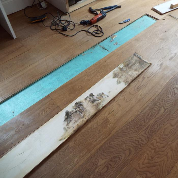 Luckily our surveyors carry a wide range of diagnostic and inspection tools which often allows us to make disruptive investigations with minimal damage. In this picture we carefully cut out a section of the engineered oak floor covering to expose Dry Rot mycelium growth within the built up floor and a huge Dry Rot fruiting body within the sub-floor.