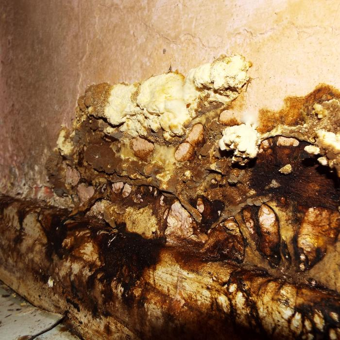 Wet rot fungal decay, perhaps not the nicest thing to discover growing in your bathroom.