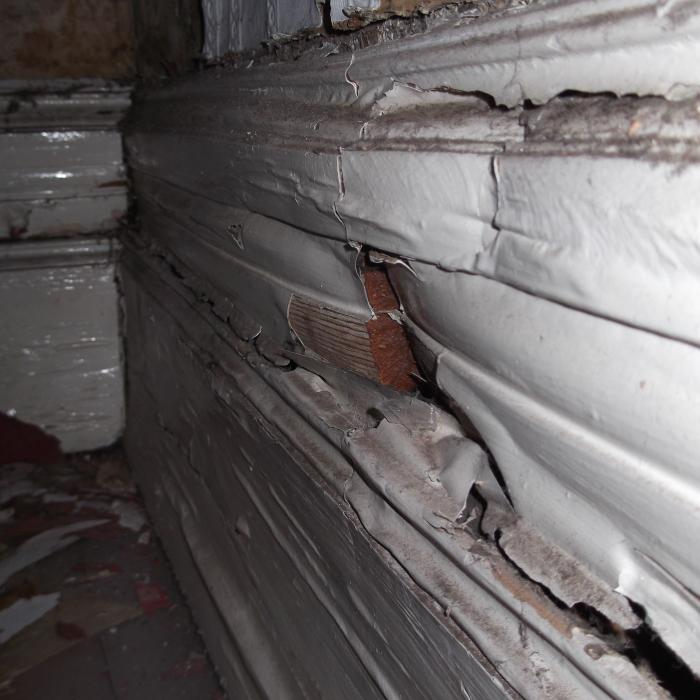 Dry Rot (Serpula lacrymans) identified during a timber survey on a large commercial property in the city centre of York causing complete breakdown of the bespoke timber skirting boards.